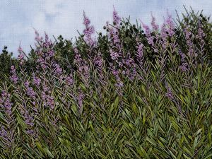 Fireweed Description: Hand embroidered wall piece.  Stitched on handpainted linen using many hand dyed cotton, silk, rayon,and linen threads...