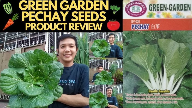 How to plant pechay bok choy green garden pechay seeds
