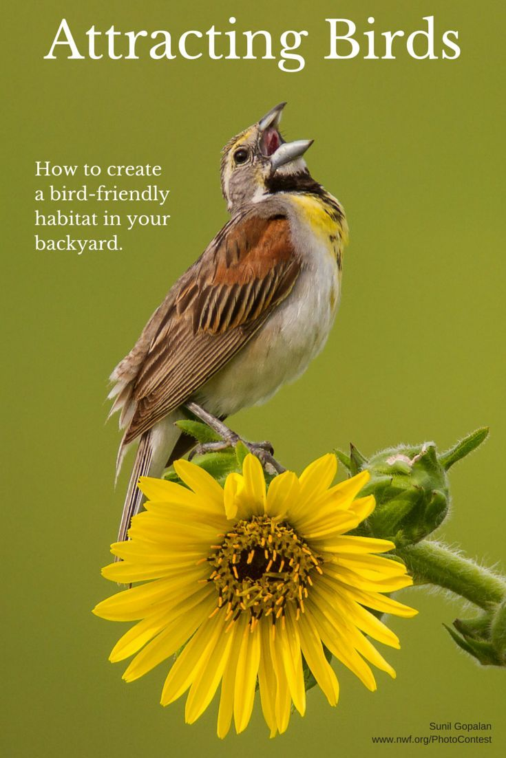 Welcome Birds To Your Yard With These Tips!