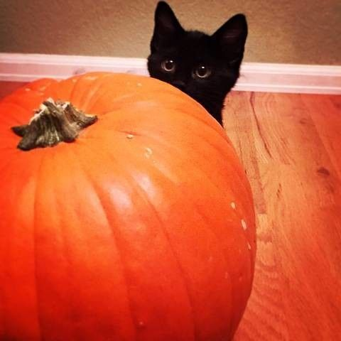 Scaredy Cat - Adorable Black Cats That Are Expertly Celebrating Halloween - Photos