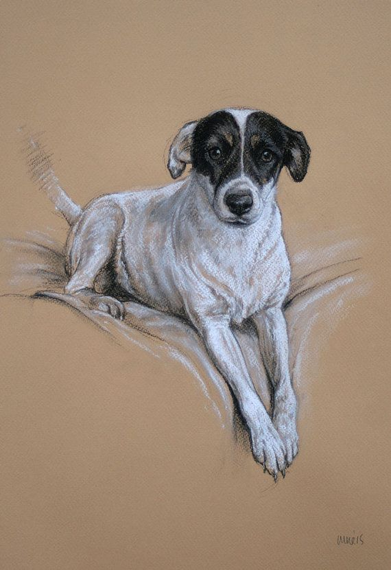 Jack Russell Terrier dog art LE fine art print by Terrierzs
