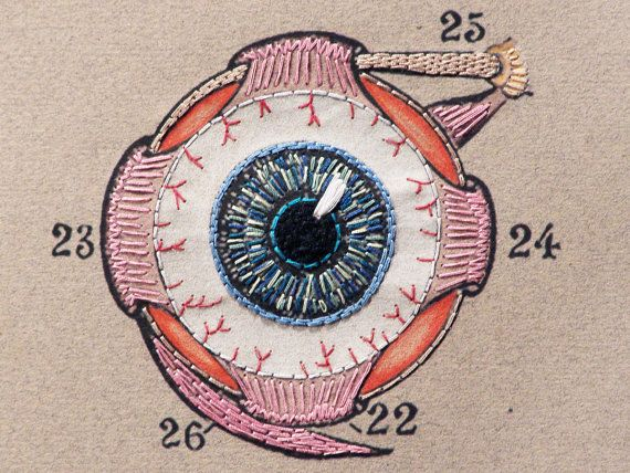 Eye Anatomy Art. Embroidered Eye Anatomy by FabulousCatPapers