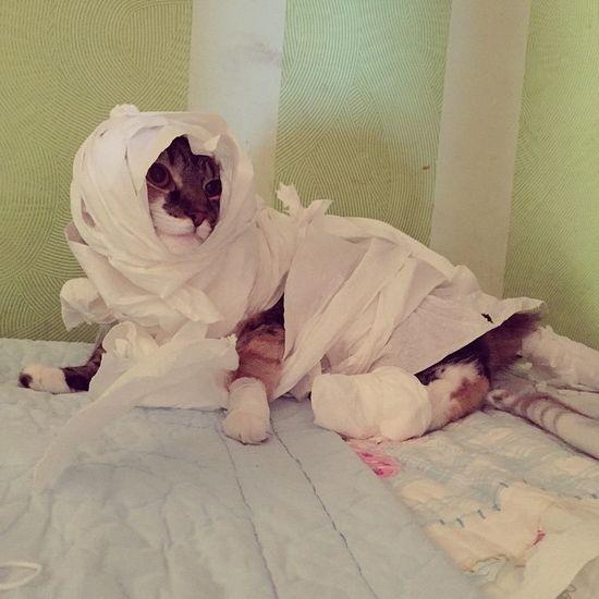 誰も教えてくれなかった「ネコに関する怖い事実」に関連した画像-11