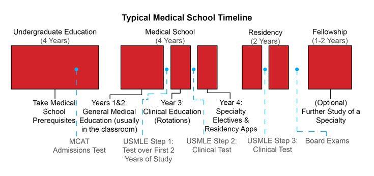 medical school timeline med school timeline science