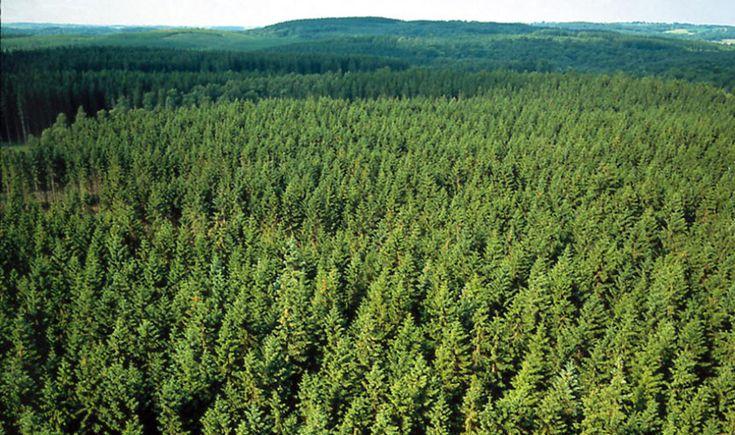 Estonia forest