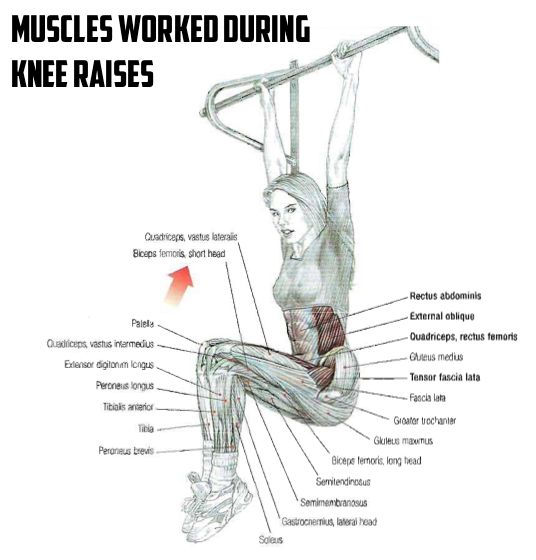 124 best images about sport on pinterest for Plank muscles worked diagram