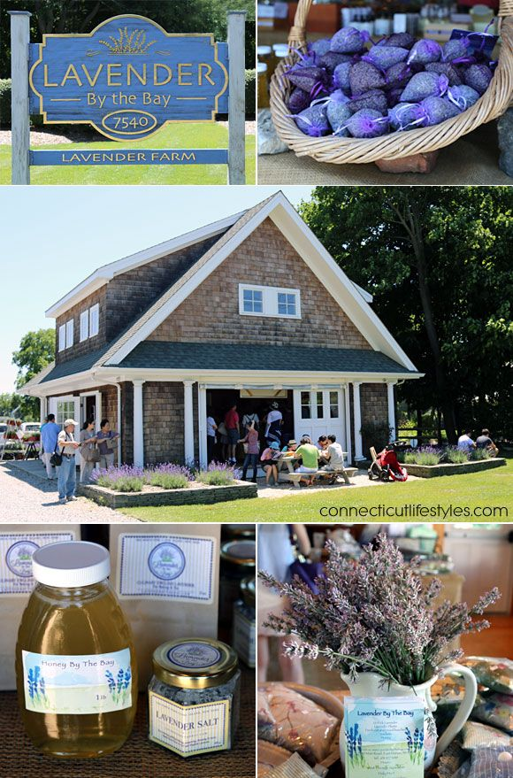 Day Tripping to Long Island's Lavender Farm - Lavender by the Bay