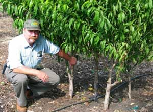 DWN: Homegarden: Backyard Orchard Culture. Wowow!  Mind blowing, at least to me.