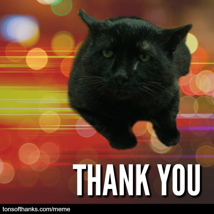 51 Nice Thank You Memes With Cats Cats Thank You Cat Meme Cat Memes