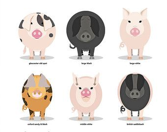 British Livestock Greeting Cards - Pack of 5  All 5 British Livestock Series greeting cards - Pigs, Cows, Sheep, Chickens, Horses  Pack includes one of each card, but please contact if you would like a different combination of 5.  DL size (100 × 210mm). Printed on 220 gsm matte card. With diamond flap envelope. Blank inside. Comes in a protective cello sleeve.  Large prints of each breed available in my shop (30x40cm).  More prints at www.alscouzens.com