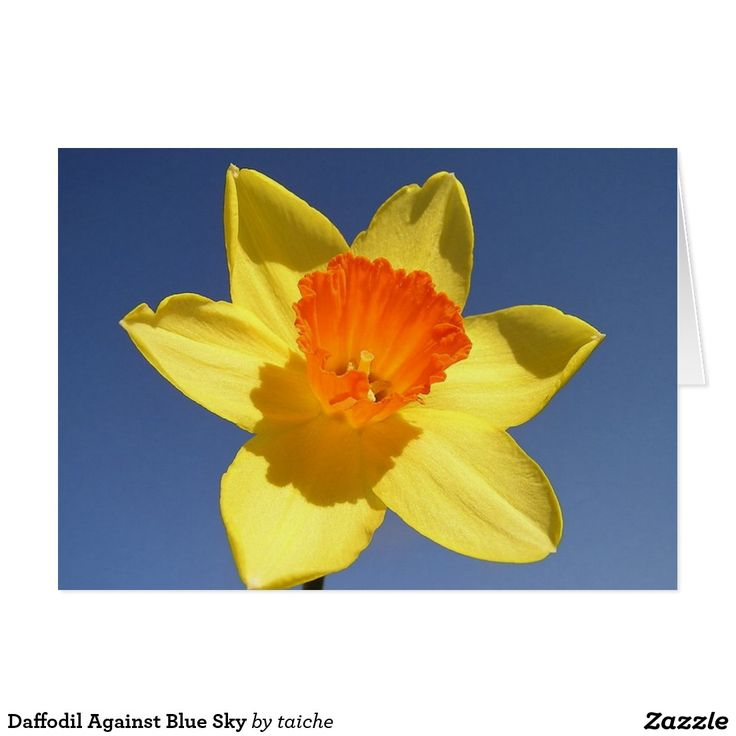 Daffodil Against Blue Sky Card #Daffodil Against #Blue #Sky #Card http://www.zazzle.com/daffodil_against_blue_sky_card-137910113814878946?design.areas=%5Bcard_5x7_outside_print_horz_front%2Ccard_5x7_outside_print_horz_back%5D&CMPN=shareicon&lang=en&social=true&view=113746676960125879&rf=238616195033801520