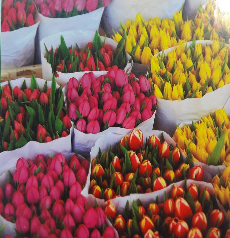 """O tema do #thefabulousproject de hoje é """"colorido"""". Essas flores coloridas são da capa do Guia Visual da Folha de São Paulo de Amsterdã. Adoro esses guias para a organização das viagens. Eles são muito explicativos e com imagens inspiradoras! Vale a pena investir... #viajarcorrendo #amsterdam #iamsterdam #folhadesaopaulo #guiavisual #turismo #viagem #dia5"""