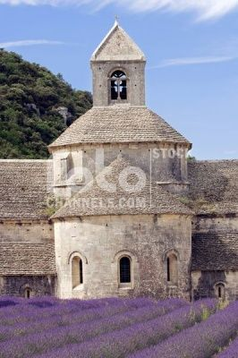 Blooming lavender, Senanque Abbey, Gordes, Provence, Southern France, Europe, Numer utworu: IBR0390312, Fotochannels