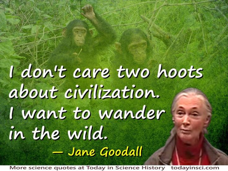 I don't care a single hoot about civilization. Civilization is a crime against the Living World. Civilization is male violence. Male violence is the worst problem in the Living World.
