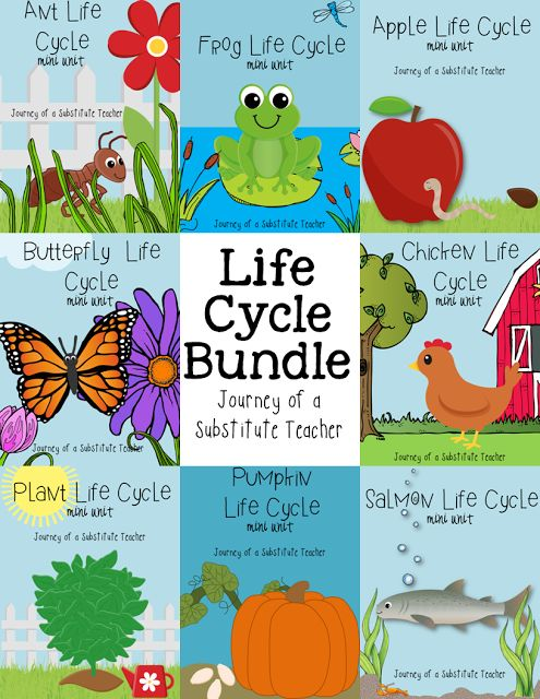 Journey of a Substitute Teacher: Life Cycle Bundle