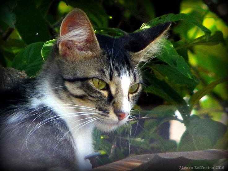 ojos verdes - Ojos verdes, felinos y bellos