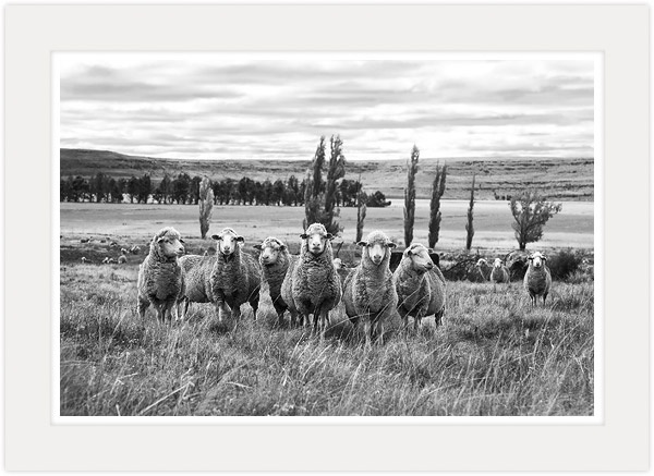 """In the Field"" - Black and White Fine Art Photography by South African Master Photographer Marlene Neumann - www.marleneneumann.com - E-mail: neumann@worldonline.co.za"