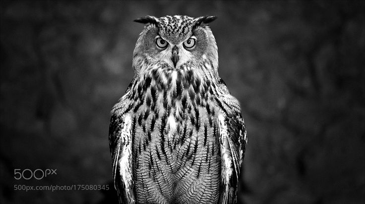 eagle owl by fredmatos via http://ift.tt/2dohQHW