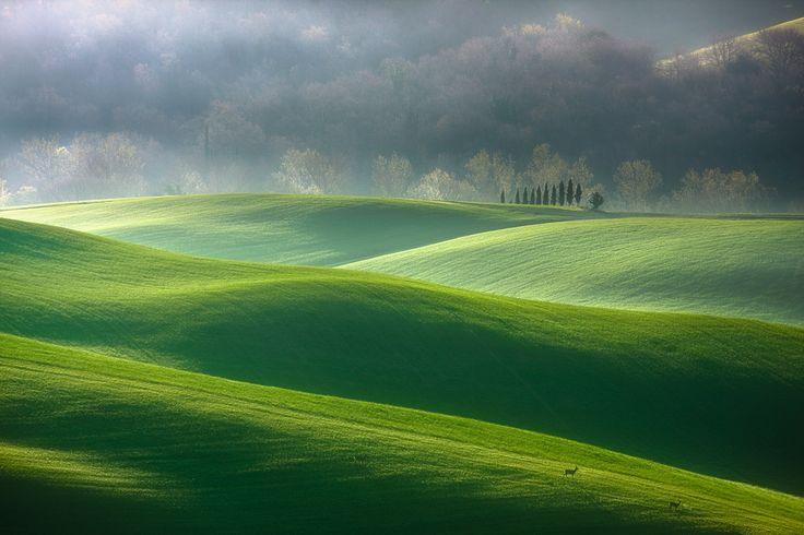 Солнечный свет, туман в предрассветный час, шелест крон деревьев — великолепные основы бытия / Boguslaw Strempel