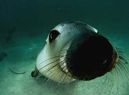 cute baby sea animals