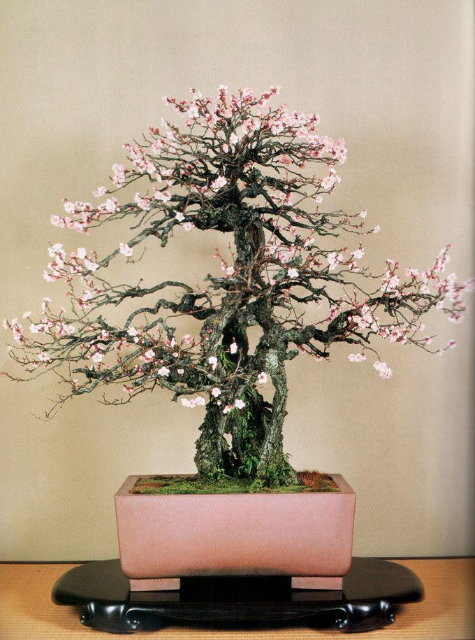 """Variations of pink in the flowers echoed in a perfectly commissioned pot yet , not redundant. Soft  feminine color pot w/ a slightly masculine shape. Naka once likened a pot to a """"nice suit"""" for a person. Choose carefully"""