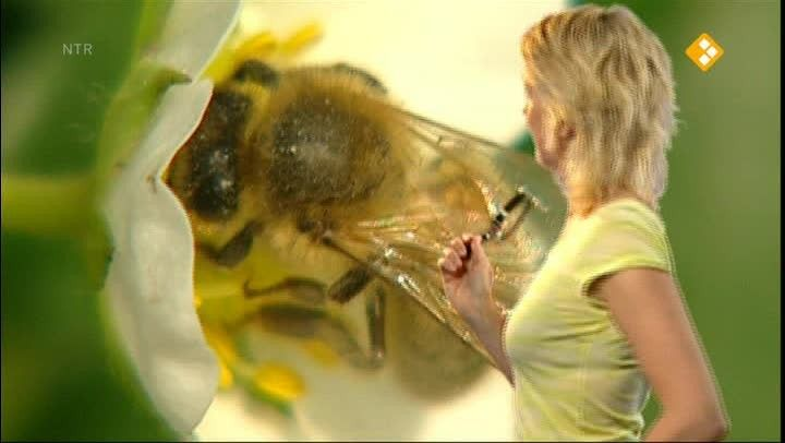 Klokhuis bijen, hommels en wespen