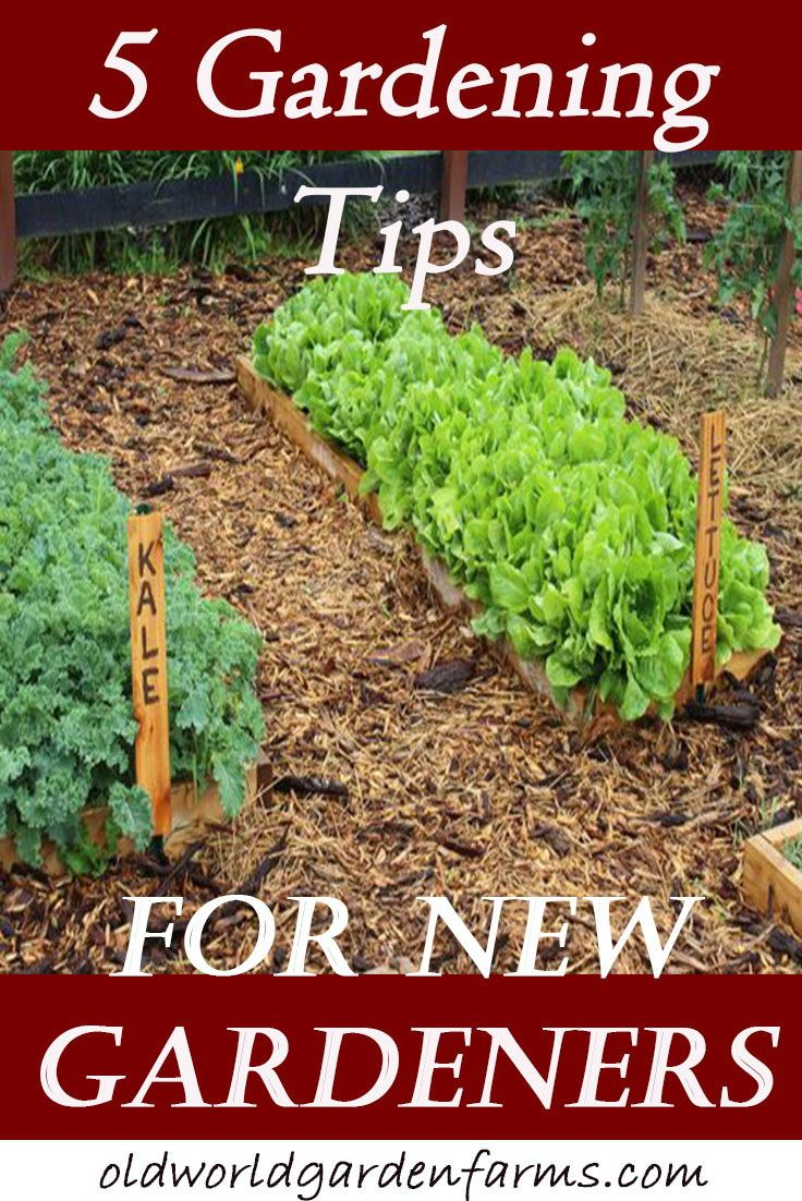 5 Great Gardening Tips for New Gardeners | Garden Advice | Pinterest ...
