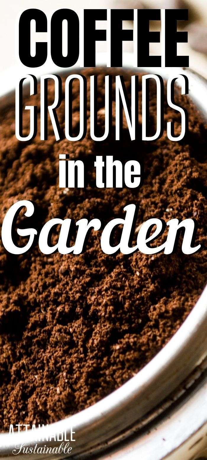 Using Coffee Grounds In The Garden In 2020 Coffee Grounds Uses For Coffee Grounds Garden Coffee