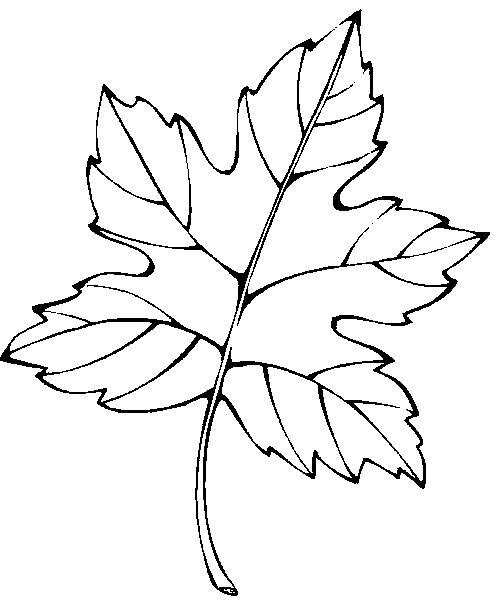 feuille d'arbre   Coloriez ce dessin à imprimer à l'aide du pinceau magique !
