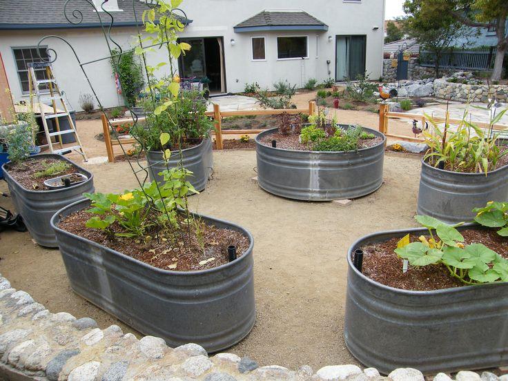Stock Tanks used as raised vegetable beds