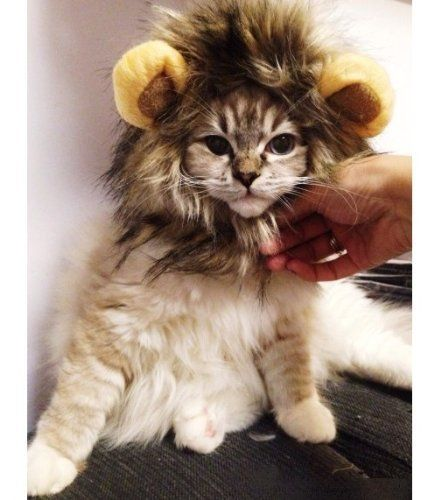 #RLWDDogCostumes: Lion Mane Wig for Cat Halloween Dress up with Ears. View details at http://realifewebdesigns.com/web-store/details/?B00NW8QEDY