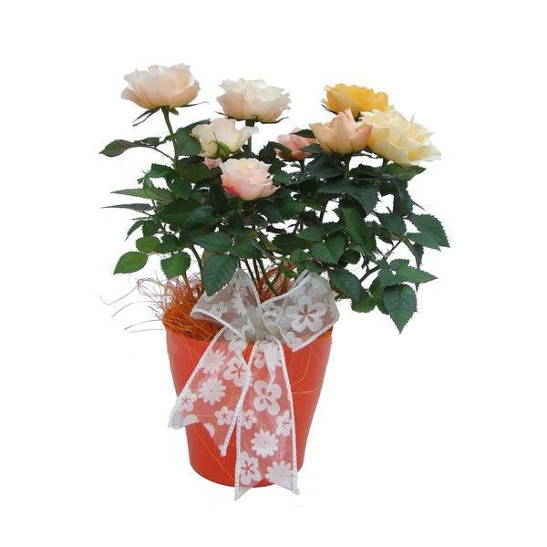 virágdísznövény | virágdísznövények - Fitoland.hu - Virágkompizíció5
