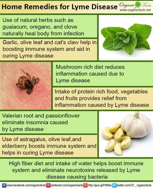 Use of herbs such as samento, wormwood and oregano provide relief from Lyme disease. Read more about the home remedies