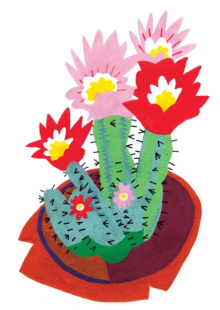 Cactus stickers for the poundshop 5 joshua wiley