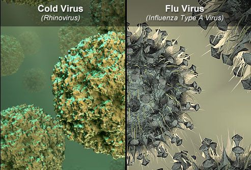 cold and flu virus microscopic