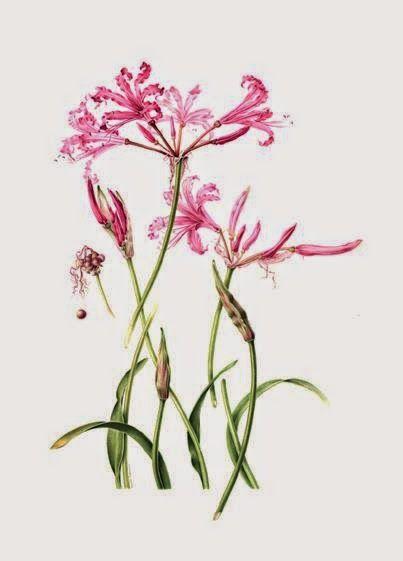 Láminas de botánica / Botanical illustrations.