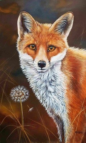 120 best fox and bear images on Pinterest Foxes, Red fox and Fox art - best of coloring page of a red fox