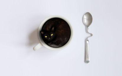 Котенок, чашка, ложка