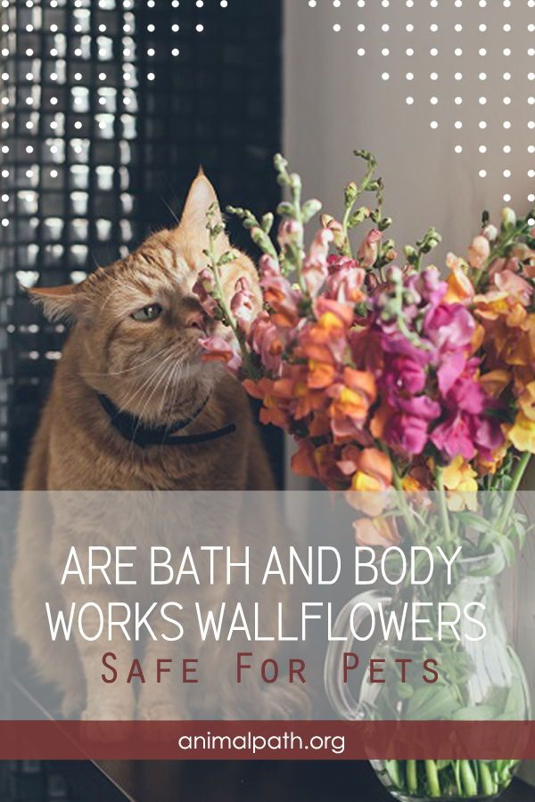 Are Bath And Body Works Wallflowers Safe For Dogs : works, wallflowers, Works, Wallflowers, Works,, Pets,