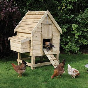 A lovely little coop for the backyard chicken keeper.