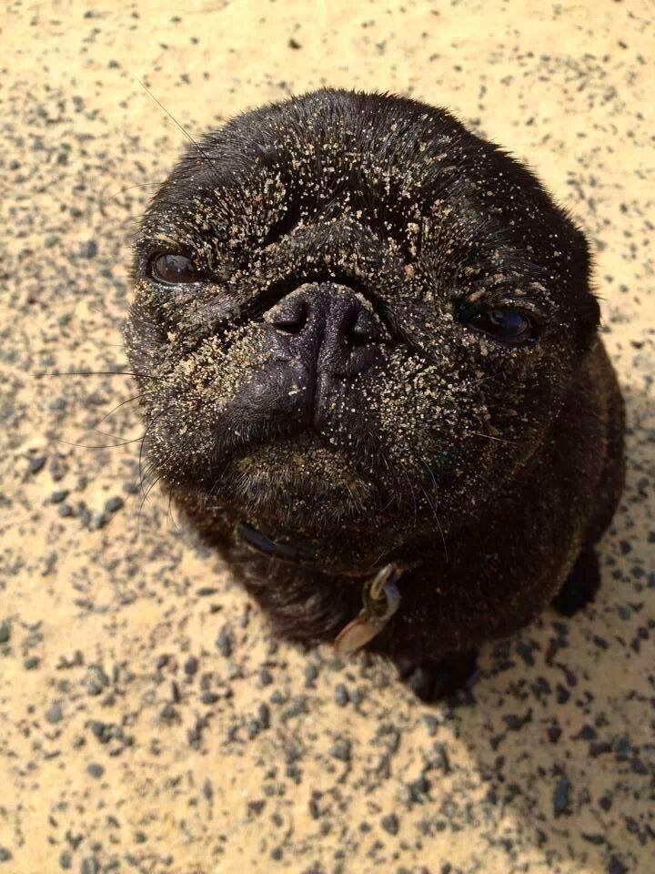 Look, ma!  I'm a seal!