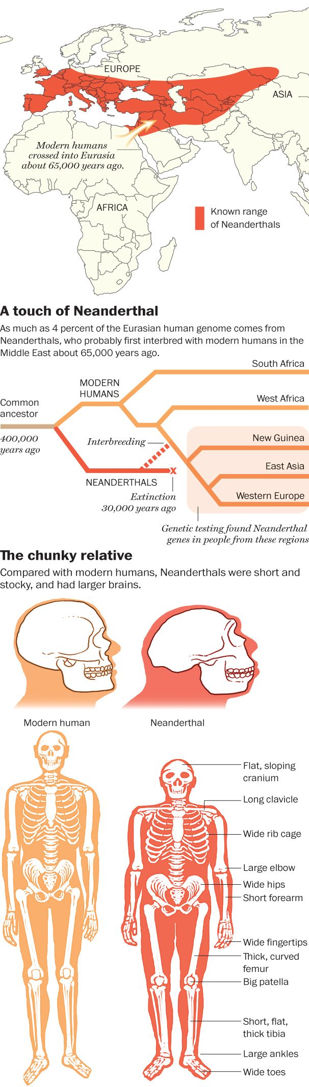Mark of the Neanderthal - The Washington Post