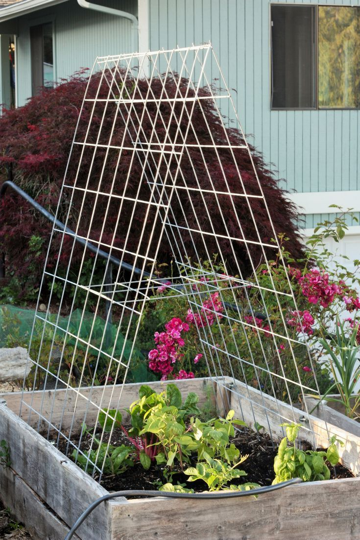 Diy Trellis Diy Garden Trellis Diy Garten Garten Hinterhof Garten