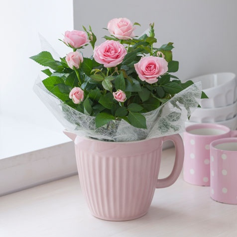 valentine's day plants uk
