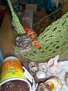 Crochet a climbing net for a hermit crab crabitat. So far I've crocheted a climbing wall.