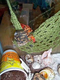 Crochet a climbing net for a hermit crab crabitat