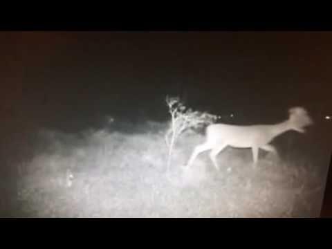 Mutant, cerf et vidéo… - Dark Ride Site sur le paranormal, les phénomènes étranges et inexpliqués.