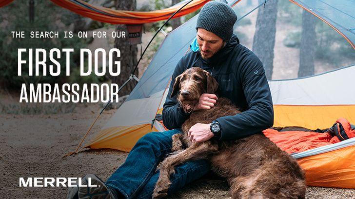 Mvote For Banjo 410 Merrell Dog Ambassador Search Banjo Dogs