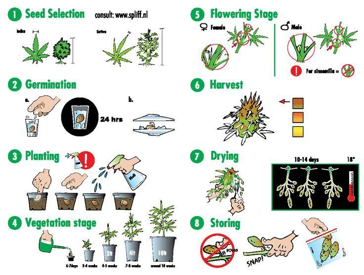 how to keep bugs off marijuana plants
