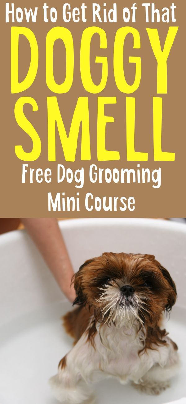 If you're struggling getting rid of that dog smell, shedding or grooming your dog, check out this free dog grooming mini course. (Affiliate Link) #dogs #doggrooming